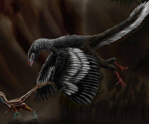 Aves de corral Archaeopteryx_lithographica orgnl